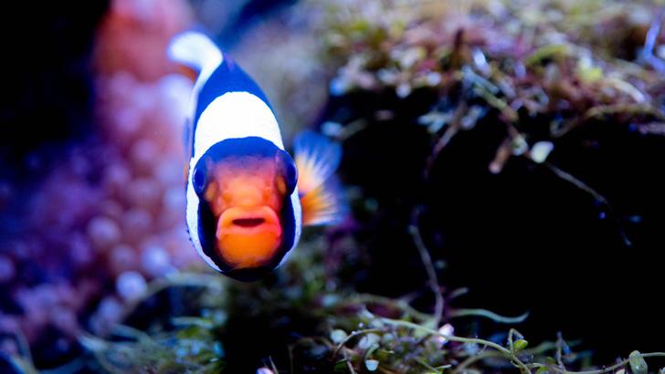 京都水族館の熱帯魚