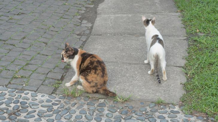 台湾の猫村の猫