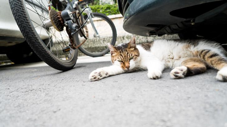台湾の雑貨屋さんにいた猫